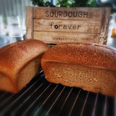 Graham sourdough sandwich bread
